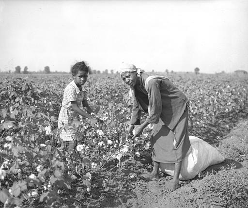 A woman and a young girl pick cotton by hand in Stoneville, Miss., Sept. 1, 1936.  (AP Photo)