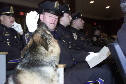 FILE PHOTO: K-9 Arex goes in search of attention from Officer John Slepski during an award ceremony for the Meriden Police Department held at Washington Middle School. | Record-Journal staff