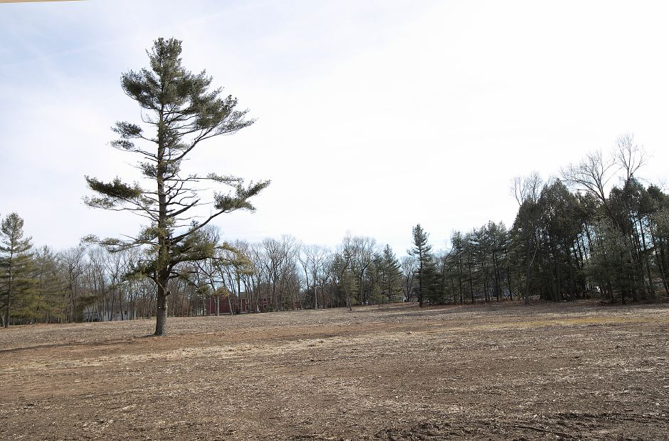 Many trees cleared at the entrance to Wharton Brook State Park in Wallingford, Tues., Jan. 15, 2019. The park has reopened after a microburst in May of 2018 shut it down. Dave Zajac, Record-Journal