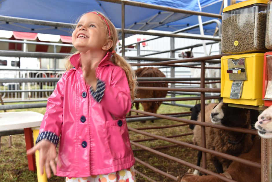 Eva Appel, 3, of Massachusetts, wipes her hands excitedly after feeding goats at the North Haven Fair on Friday, Sept. 7. | Bailey Wright, Record-Journal