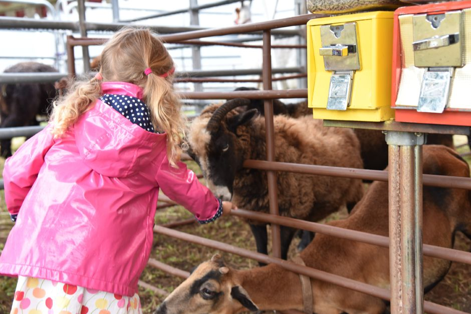Eva Appel, 3, of Massachusetts, feeds goats in the petting zoo area at the North Haven Fair on Friday, Sept. 7. | Bailey Wright, Record-Journal| Bailey Wright, Record-Journal