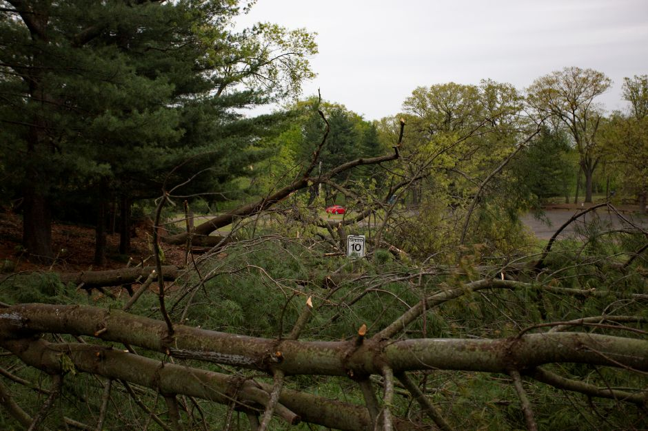 Fallen trees block the road to the lake at Wharton Brook State Park in Wallingford May 16, 2018, trapping a car in the parking area. | Richie Rathsack, Record-Journal