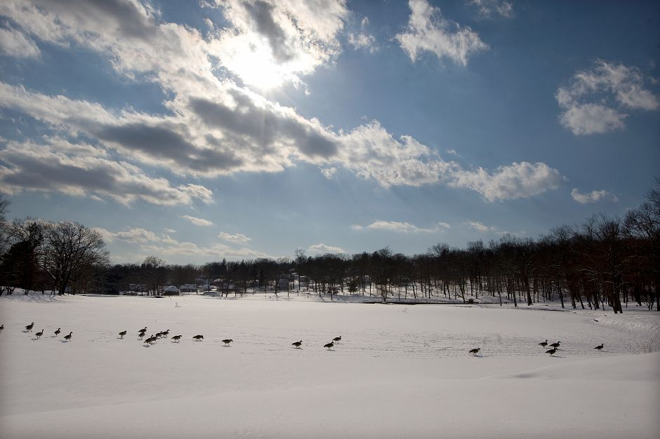 Geese walk across a snow-covered Mirror Lake in Meriden