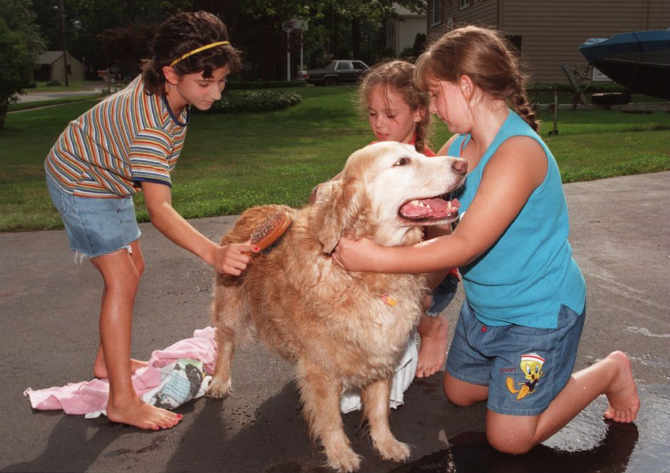 RJ file photo - Friends Kristin Thoelin, left, Rachel Gitter, center and Nicole Ferri, right, dry and brush Ginger, a golden retriever, after her pet wash in Wallingford, Aug. 1998.