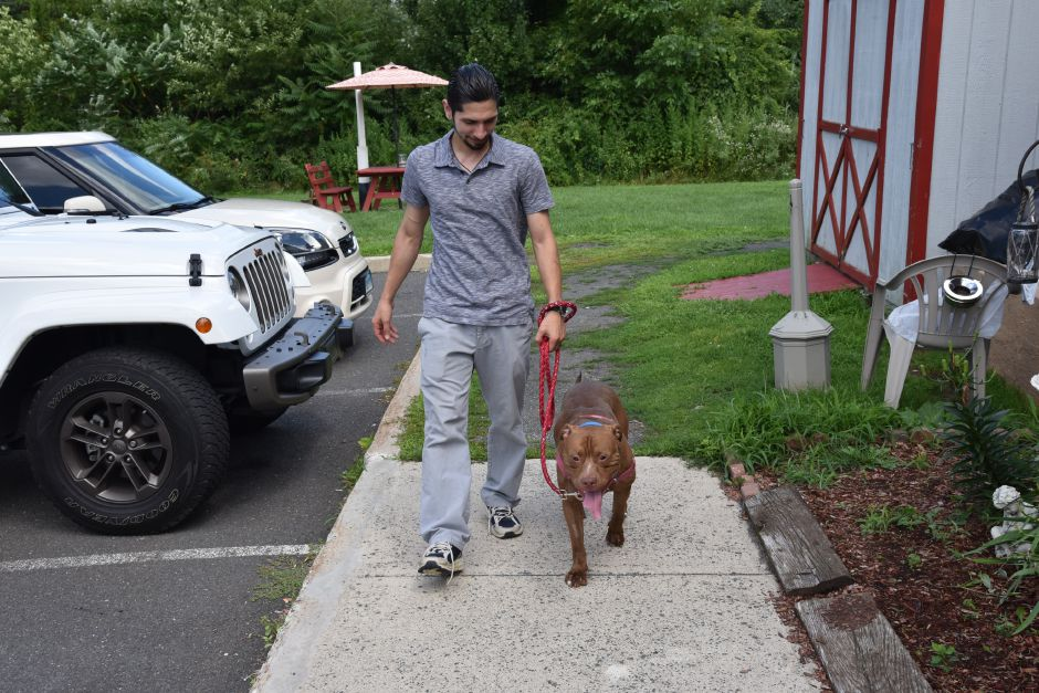 Bruno is a 2-year-old pitbull up for adoption at the Meriden Humane Society, 311 Murdock Ave. Matthew Zabierek, Record-Journal