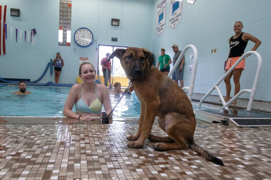 Stephanie Havican tries to coax Nellie a 4-month-old rescue, into the water Sunday during the YMCA Puppy Plunge at the Wallingford YMCA in Wallingford. August 26, 2018 | Justin Weekes / Special to the Record-Journal
