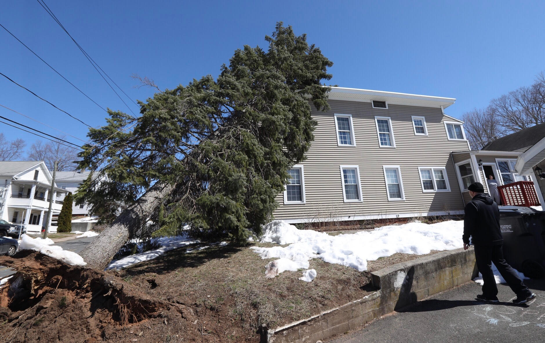 The owner of an apartment house at 42-44 Vermont Ave. in Southington, looks over the damage done by a fallen evergreen tree, Wednesday, March 22, 2017. | Dave Zajac, Record-Journal