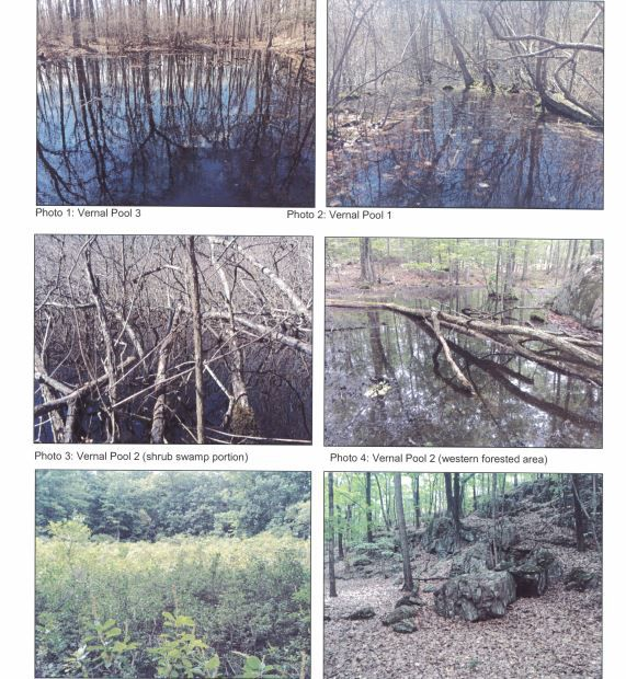 Vernal pools, significant to wildlife breeding, pictured in the Tilcon Environmental Study. | Ashley Kus, The Citizen