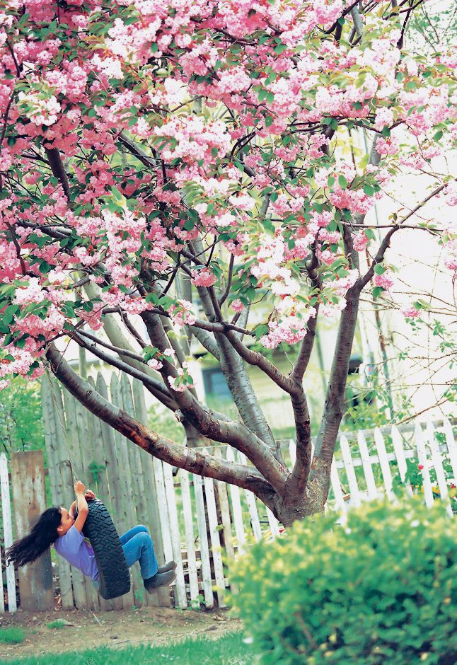 RJ file photo - Nine-year-old Julie Figueroa swings from a blossoming tree in her family