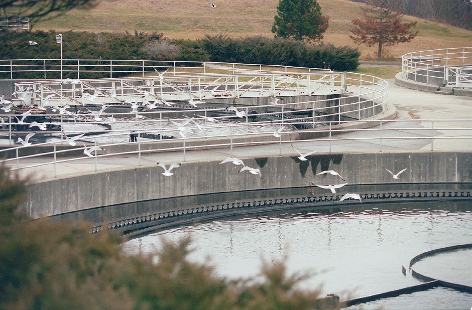 RJ file photo - Herring gulls seem not to notice the smell as they fly above the Meriden water treatment plant