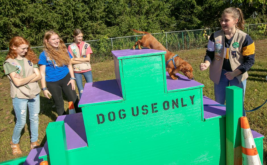 Miniature dachshund Buddy, owned by Town Councilor Dawn Miceli, steps down new exercise stairs built by Girl Scout Troop 66856 from Flanders Elementary School, their families and the Parks Dept. at the Southington Dog Park on Friday. From left to right are scouts Lily Talon, Abby Konopka,  Emma Miller and Julia Crowley, all 14 years old. Photos by Dave Zajac, Record-Journal