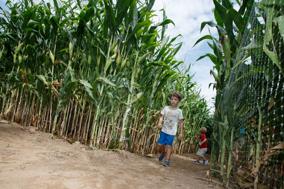 Hunter Harring, 5, leads his brother Colt, 2, of Cheshire through the Dancing with the Stars themed corn maze Saturday during Lyman Orchard