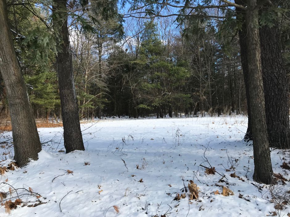 The proposed location for a town dog park, Norton Place Extension, Thursday, Dec. 14. |Ashley Kus, The Citizen