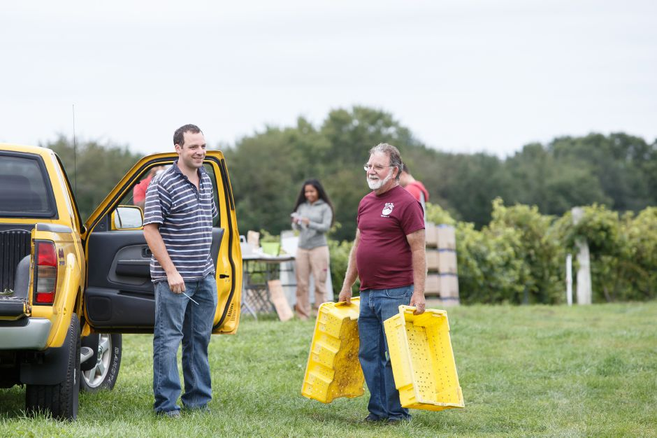 Joe Gouveia right talks with a volunteer Chris Quiello of Wallingford Sunday during the Gouveia Vineyards Harvest at Gouveia Vineyards in Wallingford September 23, 2018 | Justin Weekes / Special to the Record-Journal