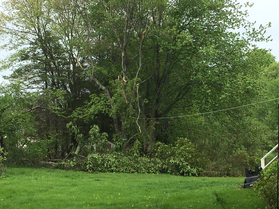 Durham resident Steven Willets came home Tuesday to find trees down in his backyard and his wife's car crushed under a fallen tree branch. She was not in the vehicle and there were no reported injuries from the incident. | Lauren Takores, Record-Journal