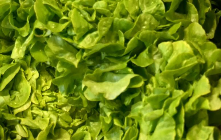 Farm fresh lettuce at Connecticut Fresh Food & Produce Market, 920 South Colony Road, Wallingford. |Ashley Kus, Record-Journal