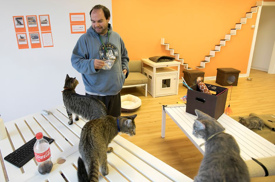 Tim Balser, a Cheshire native now living in New Haven, enjoys the company of cats at Mew Haven Cat Cafe at 904 Whalley Ave. in New Haven, Monday, Dec. 4, 2017. The pop-up cat lounge runs through Wednesday 12/13. Dave Zajac, Record-Journal