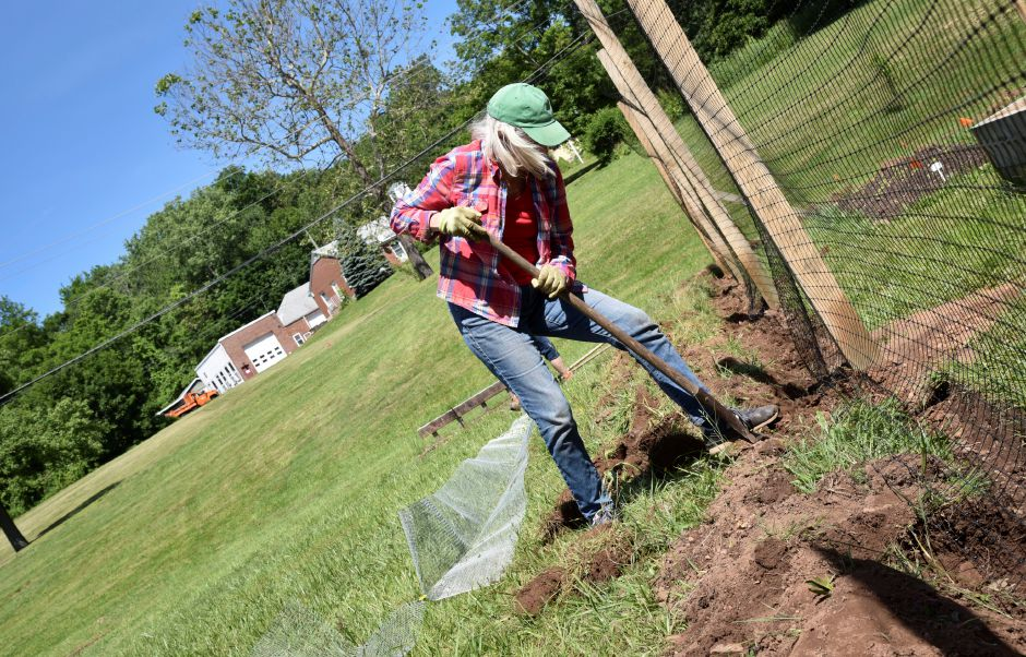 Kassie Rhodeen of Durham helps dig around the Durham-Middlefield Giving Garden, behind the community center on Main Street, on June 14, 2019. Volunteers are welcome every Saturday from 9 a.m. to noon. | Bailey Wright