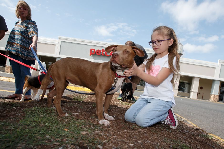 "Aliyah Moran 7 of Plainville pets ""Dava"" a 8 month old female Pit Bull mix Sunday during Companion Pet Rescue adoption at Petco in Southington September 2, 2018 