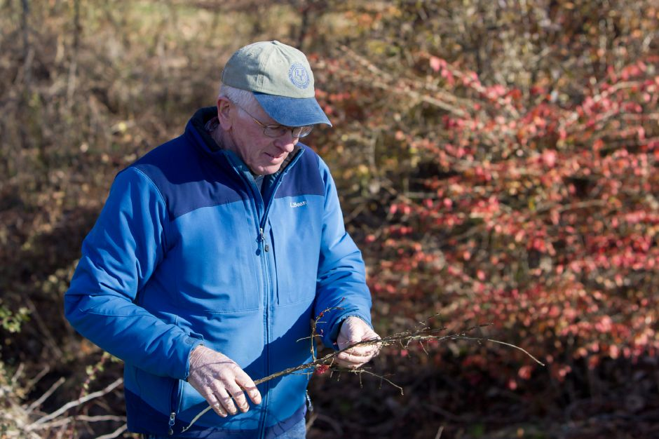 Walt Brockett of North Haven recovers a branch of a Burning Bush for the group to identify Friday during Cheshire Land Trust