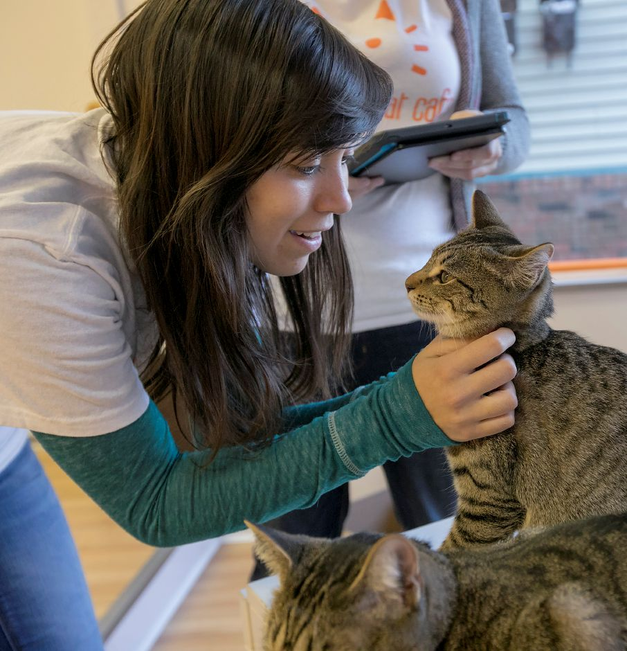 Elissa Martin, cat lounge attendant, gives a scratch to one of several cats at Mew Haven Cat Cafe at 904 Whalley Ave. in New Haven, Monday, Dec. 4, 2017. The pop-up cat lounge runs through Wednesday 12/13. Dave Zajac, Record-Journal