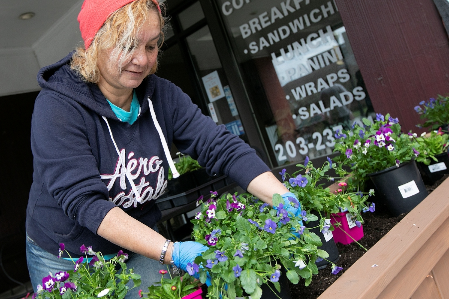 Volunteer Sandra Nieves, of Meriden, plants flowers next to Downtown Coffee Shop on West Main Street in Meriden, Mon., Apr. 22, 2019. The Downtown Beautification Committee will continue planting flowers donated by the Casertano Family of Cheshire in spring, summer and fall. A dozen volunteers helped fill 26 flower boxes on West Main and Colony Streets. Dave Zajac, Record-Journal