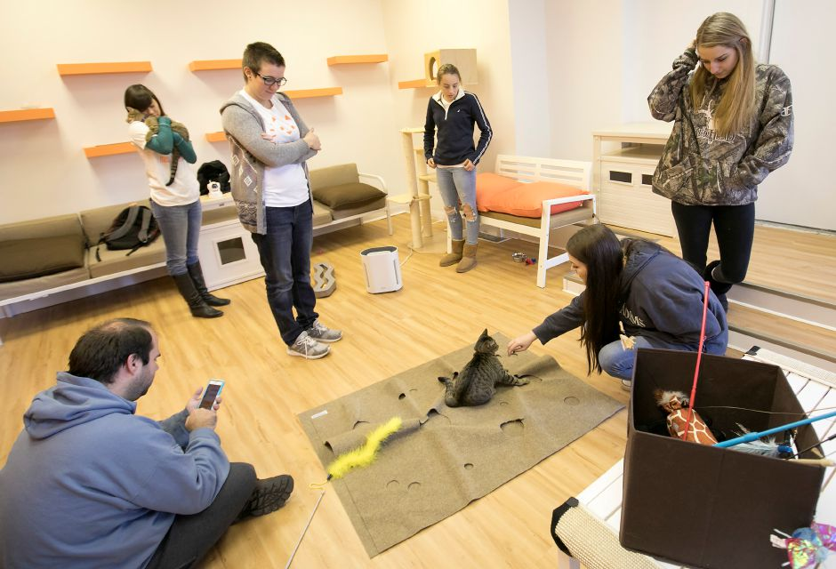 Staff and patrons of Mew Haven Cat Cafe enjoy the company of cats at 904 Whalley Ave. in New Haven, Monday, Dec. 4, 2017. The pop-up cat lounge runs through Wednesday 12/13. Dave Zajac, Record-Journal