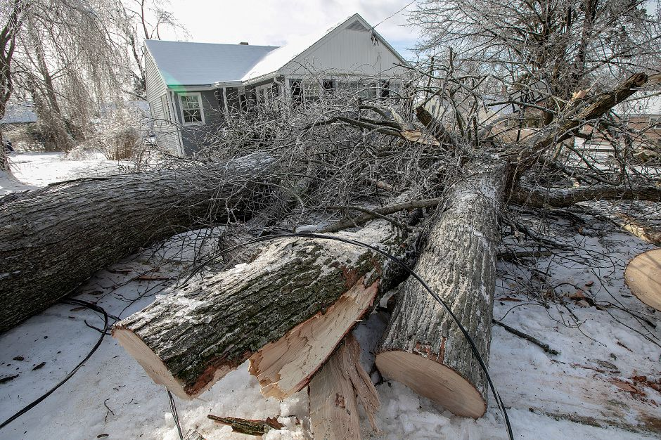 A fallen tree rests in the front yard of 45 Pine St. in Wallingford, Mon. Jan. 21, 2019. Dave Zajac, Record-Journal