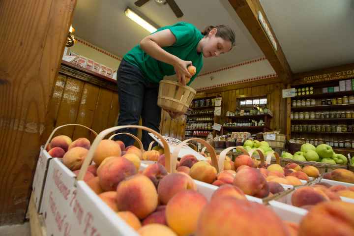 Meagan Angelone restock peaches in the store Sunday during the free peach sundae at Rogers Orchards in Southington  Aug. 20, 2017 | Justin Weekes / For the Record-Journal