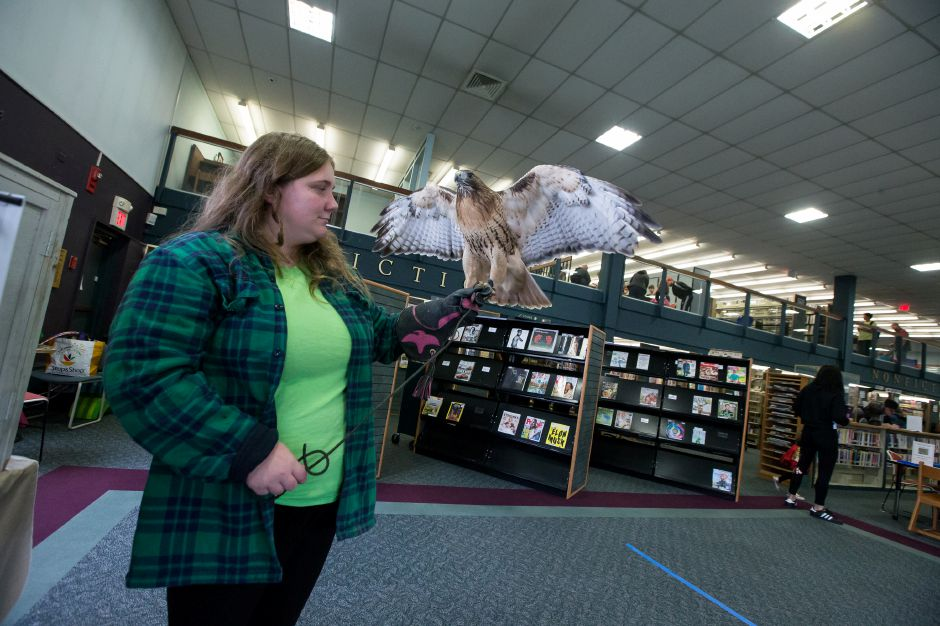 "Christine Peyreigne holds a red tailed hawk named ""Amelia"" Saturday during the 2nd Annual Renaissance Fair at the Southington Library. Photos by Justin Weekes, special to the Record-Journal"