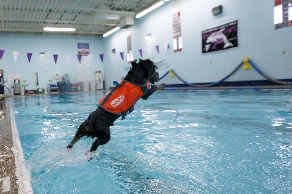 Sunday during the YMCA Puppy Plunge at the Wallingford YMCA in Wallingford. August 26, 2018 | Justin Weekes / Special to the Record-Journal