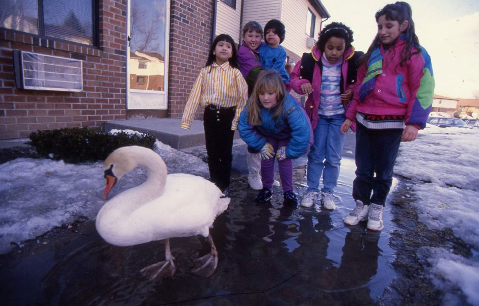 RJ file photo - Renee Hamel, Amanda Musso, Vanessa Silverio, Kelly Gagne, Rachelle Killeen and Ashley Hamel keep watch over a swan that somehow wandered to their Bradley Avenue apartment building March 11, 1994.