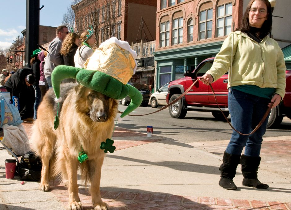 Oscar, a German Shepherd, dons a beer mug hat with shamrocks as he watches the St. Patrick