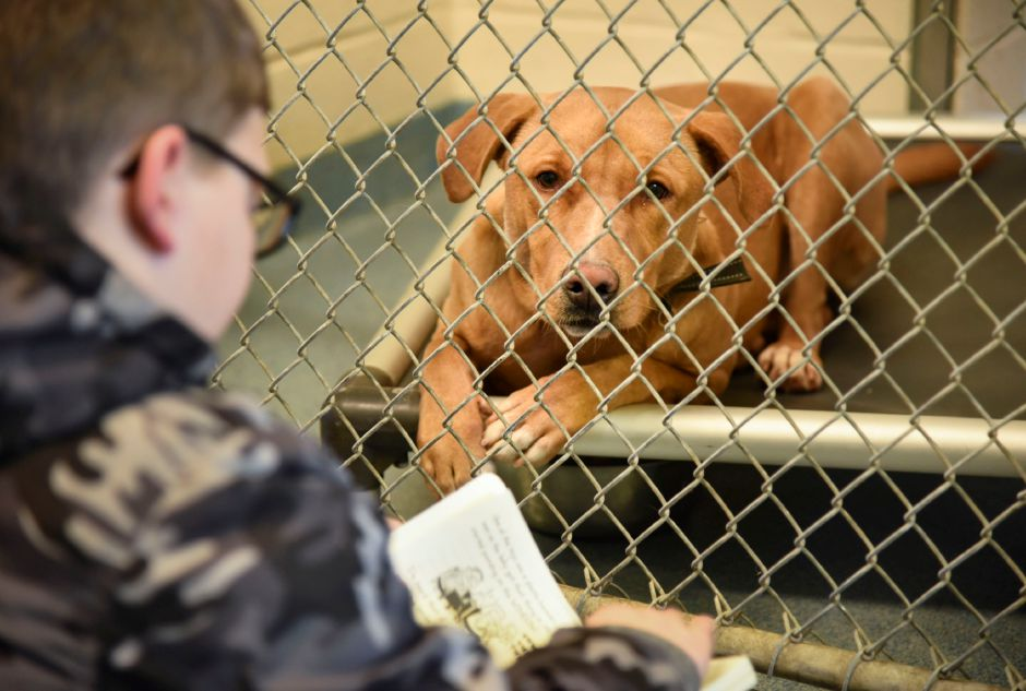 Colton Kenmealy of North Haven reads to a dog at North Haven Animal Control, 38 Terminal Road, on Tuesday, March 12. | Bailey Wright, The Citizen