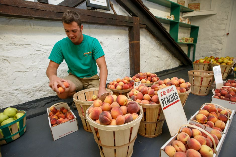 Mark Ostrowski stocks peaches for sale in the store Sunday during Peach Sundae Sunday at Rogers Orchards in Southington August 19, 2018 | Justin Weekes / Special to the Record-Journal