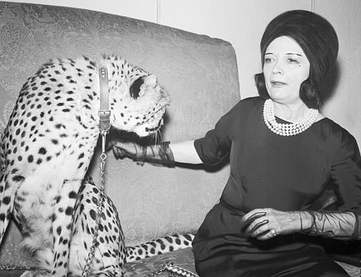 Silent movie star Pola Negri, 66-years-old, gets  friendly with Teddy, a tame 20-month-old cheetah, at a  press reception in a hotel in London, England, Oct. 25, 1963, to promote the new film she is to appear in, Walt Disney