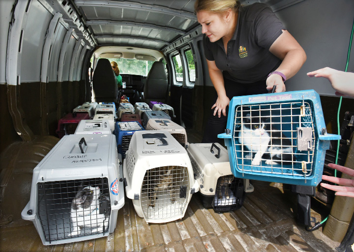 Lauren Jackowiec, the adoptions manager for the Jacksonville, Fla., Humane Society, loads crates of cats into the Humane Society