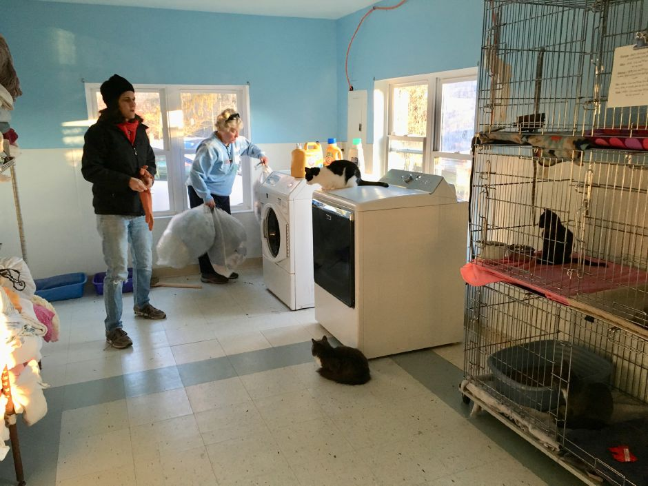 Animal Haven volunteers Linda Marino, board president, and Mary Lee Gaffney in the shelter's laundry room, also home to several cats, on Wednesday, Dec. 13, 2017. | Lauren Takores, Record-Journal