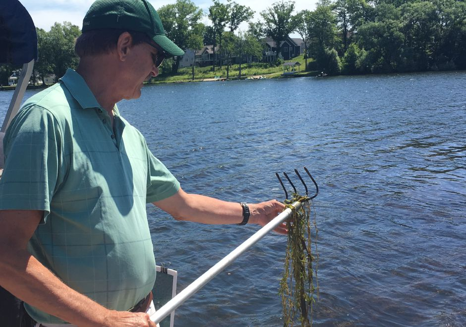Greg Bugbee, Connecticut Agricultural Experiment Station invasive aquatic plants expert, pulls curly leaf pondweed and Eurasian watermilfoil from Lake Beseck on Saturday, June 16. | Lauren Takores, Town Times