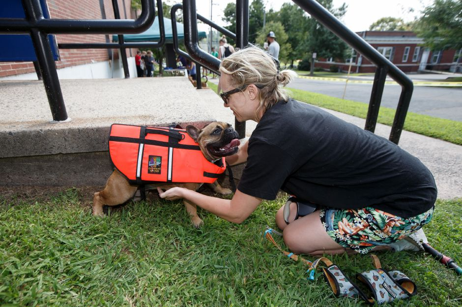 Emily Noonan fits her 1-year-old bulldog, Winston, with a flotation vest Sunday during the YMCA Puppy Plunge at the Wallingford YMCA in Wallingford. August 26, 2018 | Justin Weekes / Special to the Record-Journal