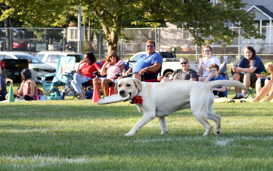 A dog named Meadow catches a frisbee thrown by owner Keith Massimino.