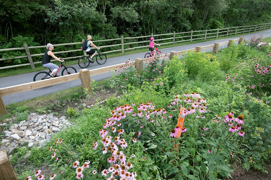 Bicyclists travel south on the Farmington Canal Heritage Trail in Cheshire, Thurs., July 25, 2019. Dave Zajac, Record-Journal