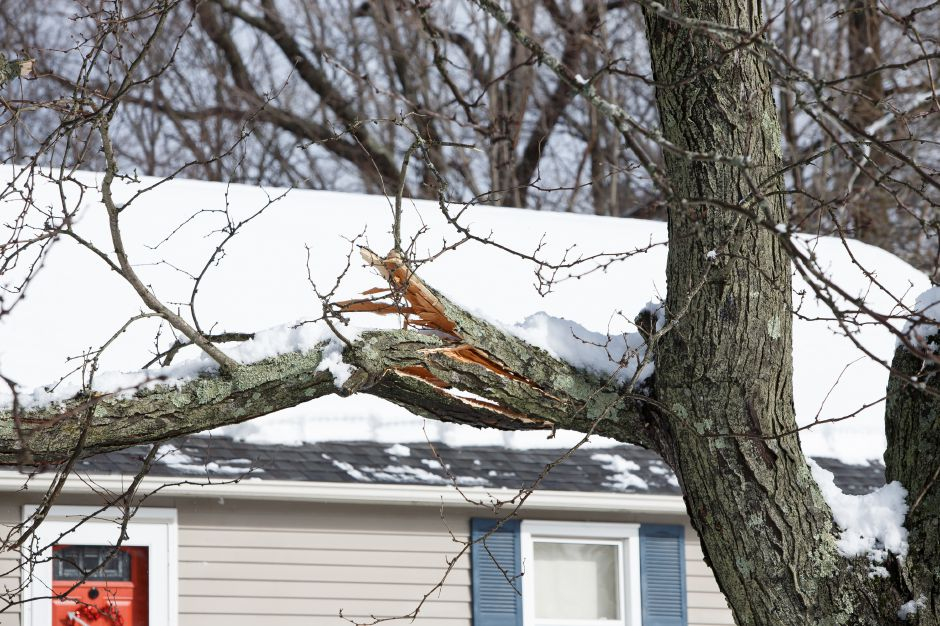 Heavy snow caused several trees limps to break under the weight on Mansion Ave in Wallingford Thursday during a winter storm clean-up March 8, 2018 | Justin Weekes / Special to the Record-Journal