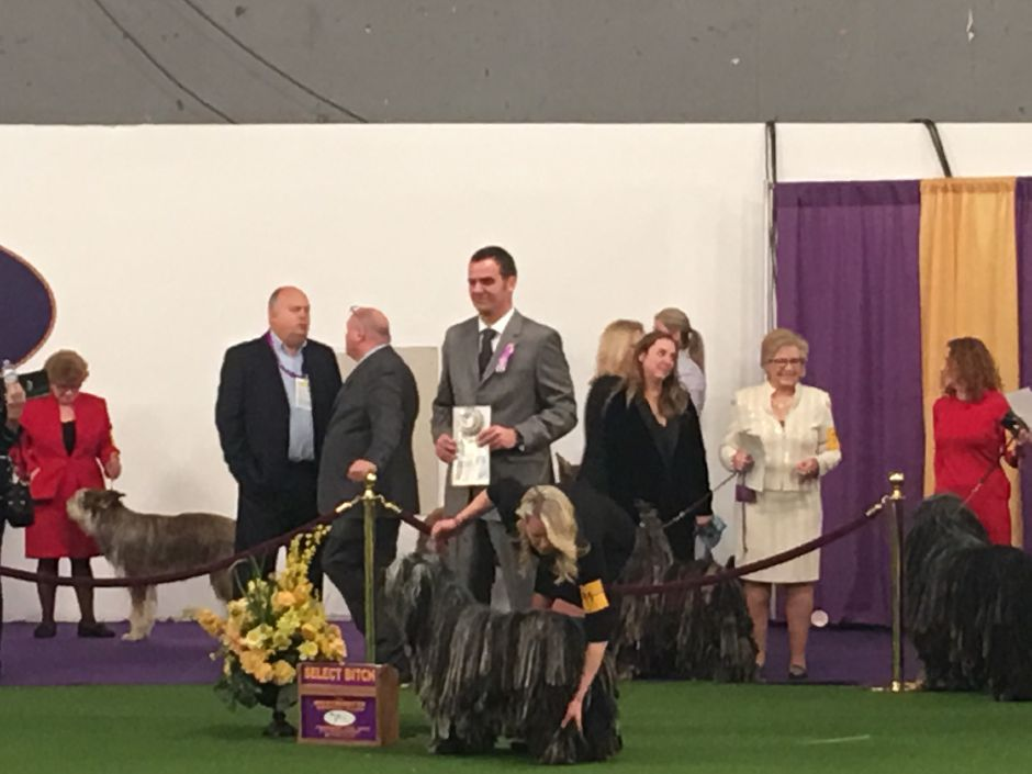 "Bergamascos Sheepdog Faggia winning ""select,"" or runner-up, at the 2019 Westminster American Kennel Club Dog Show in New York City. 