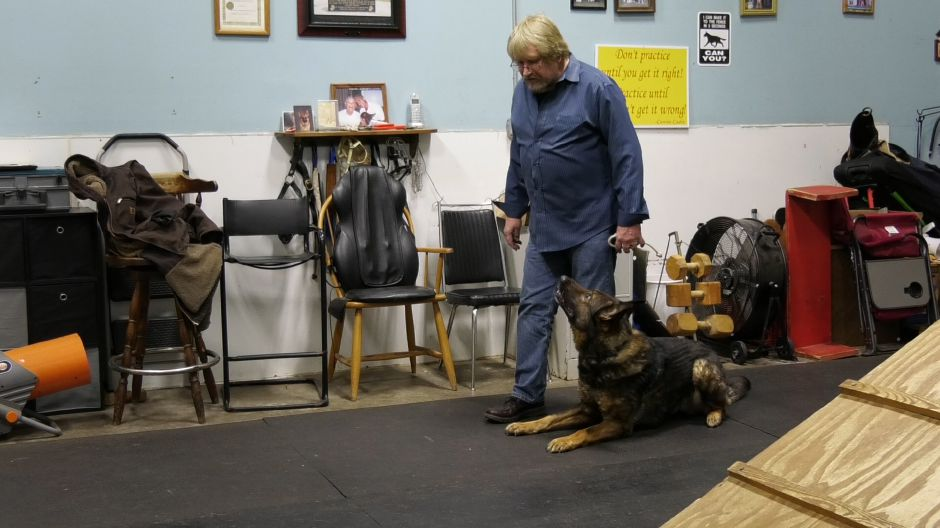 Leonard Paquette tells Kato to lie down during training at Canine Cadre, 521 Main St., Yalesville. | Ashley Kus, Record-Journal