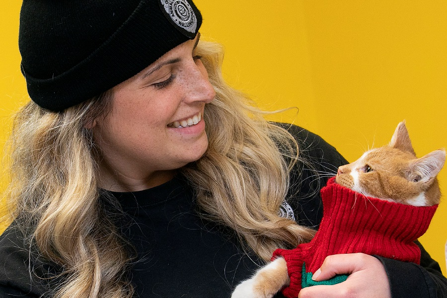 "Feline ""Juice"" wears a turtleneck  at the Municipal Animal Shelter in Wallingford. Shelter staff have been posting profiles and photos of each animal on Facebook, along with what they want for Christmas. The public is invited to visit the shelter, 5 Pent Road, from 11 a.m. to 2 p.m. Dec. 24 to spend time with the animals and drop off gifts. Dave Zajac, Record-Journal"