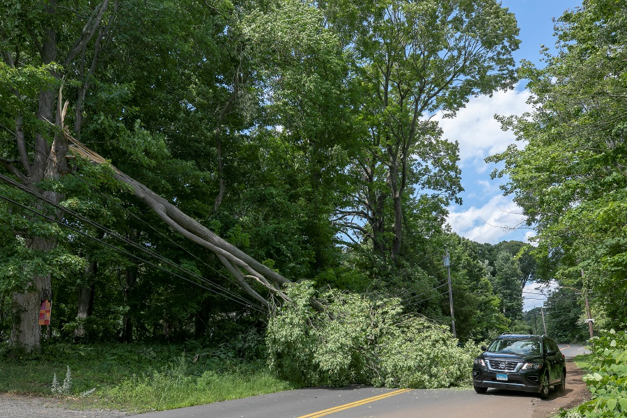 A motorist avoids a fallen tree over wires on East Street in Southington on Wednesday.
