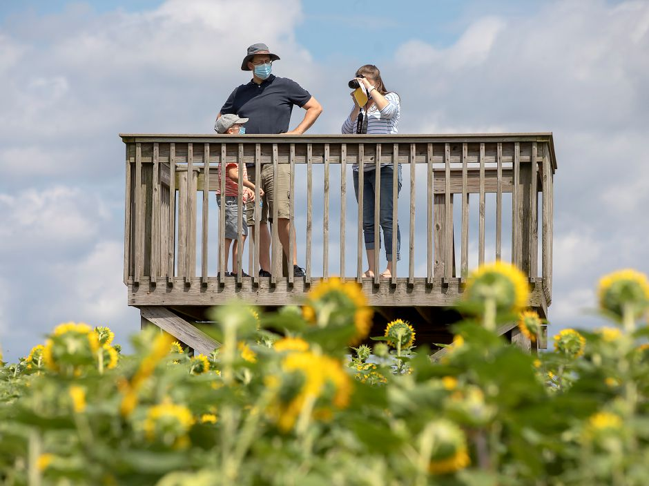 "Craig and Shanna Crockett and son, Carter, 7, of West Hartford, take in the view from a deck overlooking the Lyman Orchards Sunflower Maze, Fri., Jul. 31, 2020. More than 350,000 red and yellow sunflowers are in bloom at the 14th Annual Lyman Orchards Sunflower Maze. This year's theme is ""Back in Space"" — featuring space facts, trivia and clues. Dave Zajac, Record-Journal"