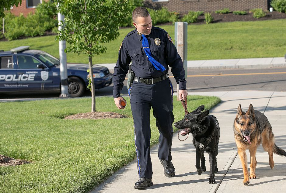Officer David Buck walks with dogs Aslan, center, and Anouke, right, on the Meriden Green, Mon., June 3, 2019. Anouke retired last month after eight years on the force and Aslan is her replacement. Dave Zajac, Record-Journal