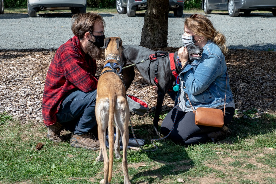 Matt Regan and Maureen Durkin speak during the annual reunion and picnic for Connecticut Greyhound Adoption, held at Camp Sloper in Southington on Sept. 20, 2020. Devin Leith-Yessian/Record-Journal